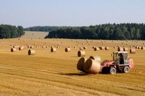 ubezpieczenie rolne ziemiopłody