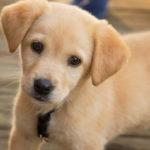 Ubezpieczenie psa kosztuje więcej jeśli ma jakieś schorzenia