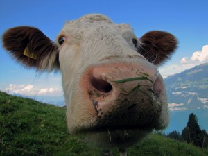 obowiązkowe ubezpieczenia rolne oc rolnika i budynków rolnych