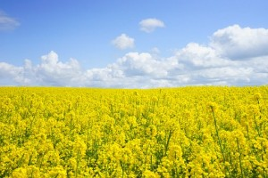 ubezpieczenie rolnicze obowiązkowe i dobrowolne